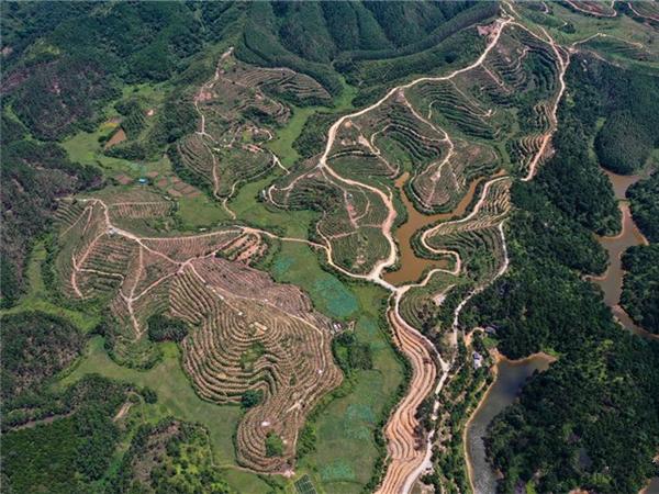 九五至尊钦州:药材种植地成旅游一景