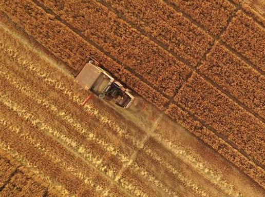 雄安新区:麦?#37038;?#20102;