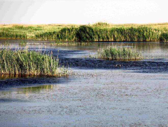 """""""沙漠之湖""""成为生态屏障"""