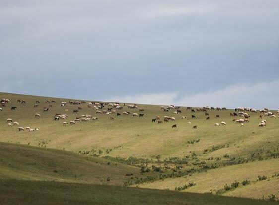 蒙古國草原夏日美景
