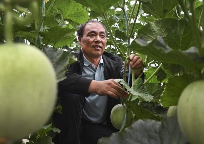 秦岭小镇特色农业