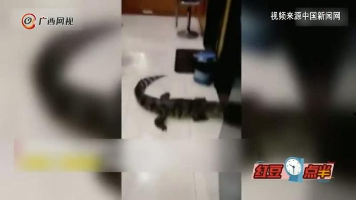一场暴雨冲出一条鳄鱼 武汉动物园辟谣:不是我们的