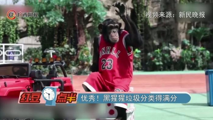 優秀!黑猩猩垃圾分類得滿分
