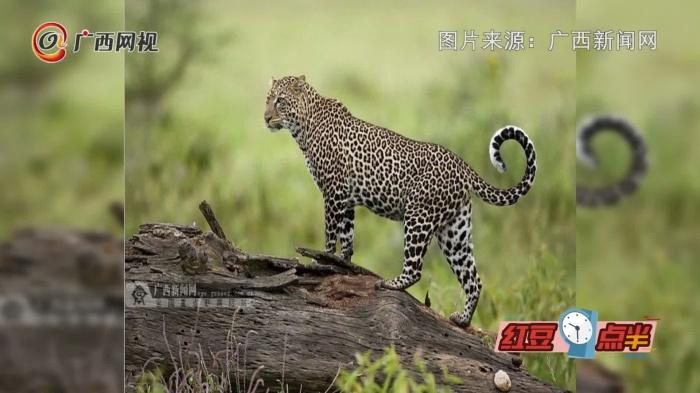 广西环江世界自然遗产地发现有100多种珍稀动植物