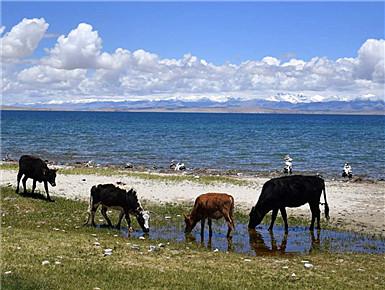 圣湖玛旁雍错湖