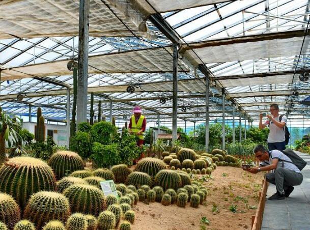 福建政和:現代光伏農業助力山區農民脫貧致富