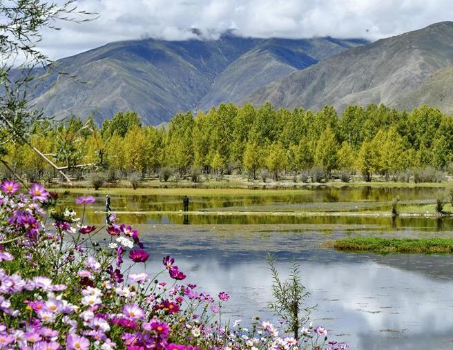拉萨:金色池塘秋色美