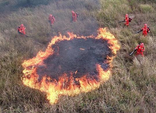 安徽肥西:森林防火应急演练