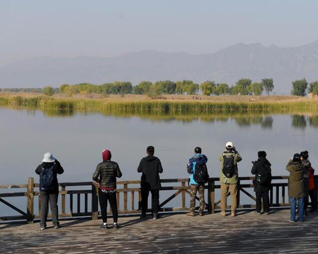 自然觀察節走進北京野鴨湖