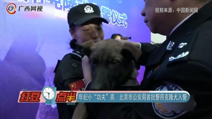 """年紀小""""功夫""""高  北京市公安局首批警用克隆犬入警"""