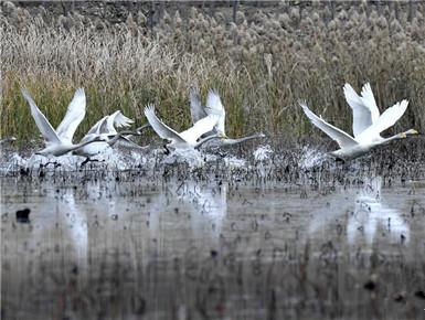 濟南:黃河之濱景色美