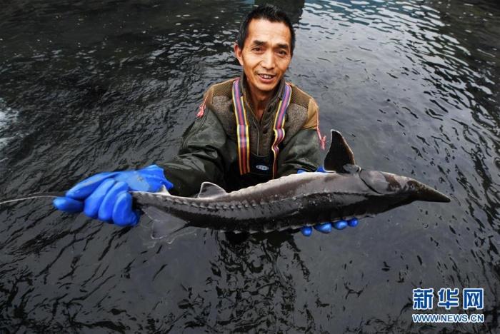 貴州江口:生態產業促增收