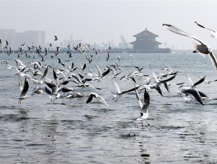 """青岛栈桥邂逅冬日""""精灵"""""""