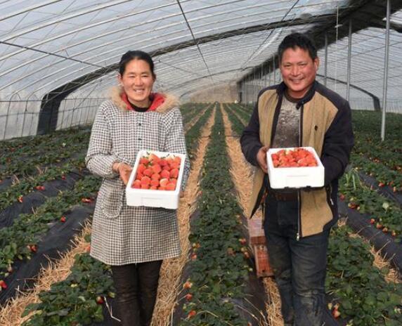 """小草莓带来鼠年""""甜生活"""""""