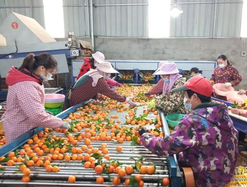 广西鹿寨:疫情防控和脱贫增收两手抓