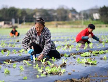 �F州玉屏:打造��^蔬菜基地