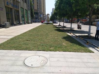 """一开发商地砖上种草皮,被业主质疑""""突击""""搞绿化"""