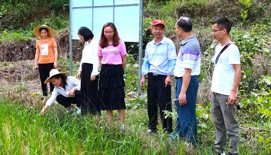 凤山:气象服务走进凤山粳米种植基地