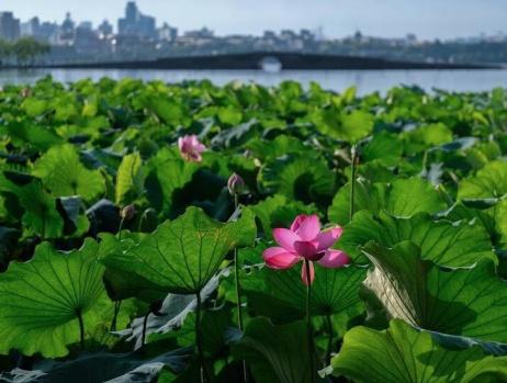 """杭州西湖呈现""""雨过天青""""夏日美景"""
