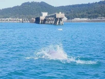 北海海域中華白海豚來拜年啦!