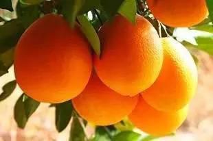 广西世华——打造生态原产地水果第一品牌
