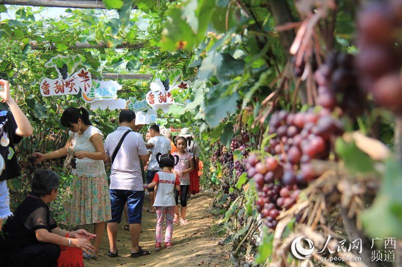 广西兴安第九届葡萄节开幕