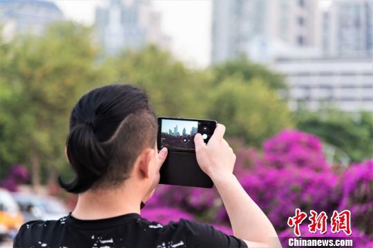广西柳州上千株三角梅盛开 画面美不胜收