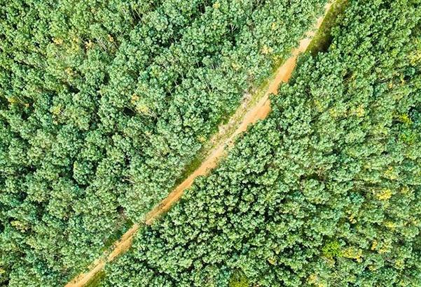 走进马来西亚婆联木业永续性森林保护区