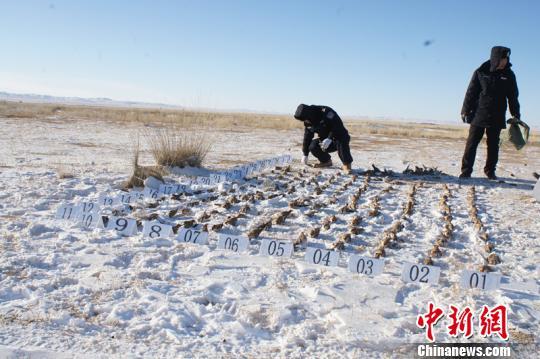 为每只一元钱利润三男子不远千里到内蒙古投毒捕鸟