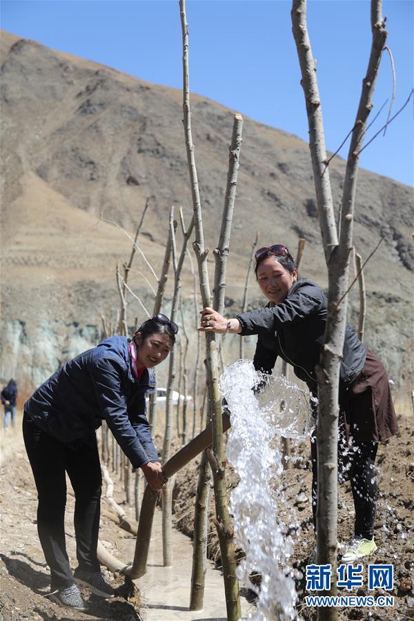 (环境)(1)青海玉树:千亩林木 绿染高原