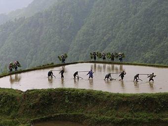 高清组图:雨水充沛!广西融水农民抢抓农时耕种