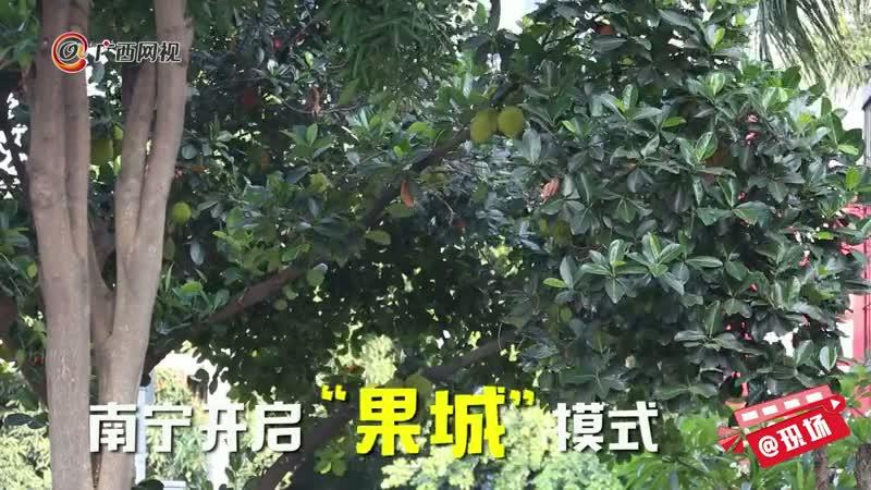 果城南宁:红了莲雾,绿了扁桃