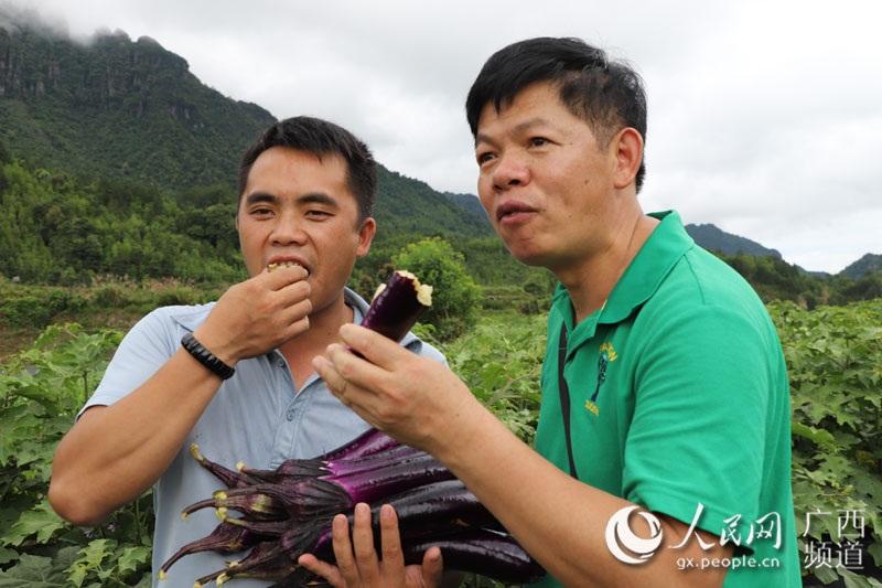 苏奇灵与游客一起品尝水果茄子