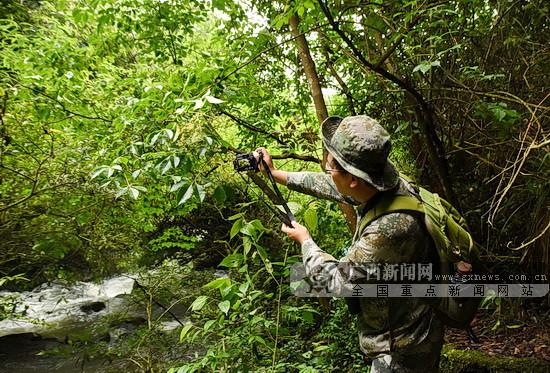 """南丹拉希湿地公园首次发现3种""""国保""""级野生动植物"""