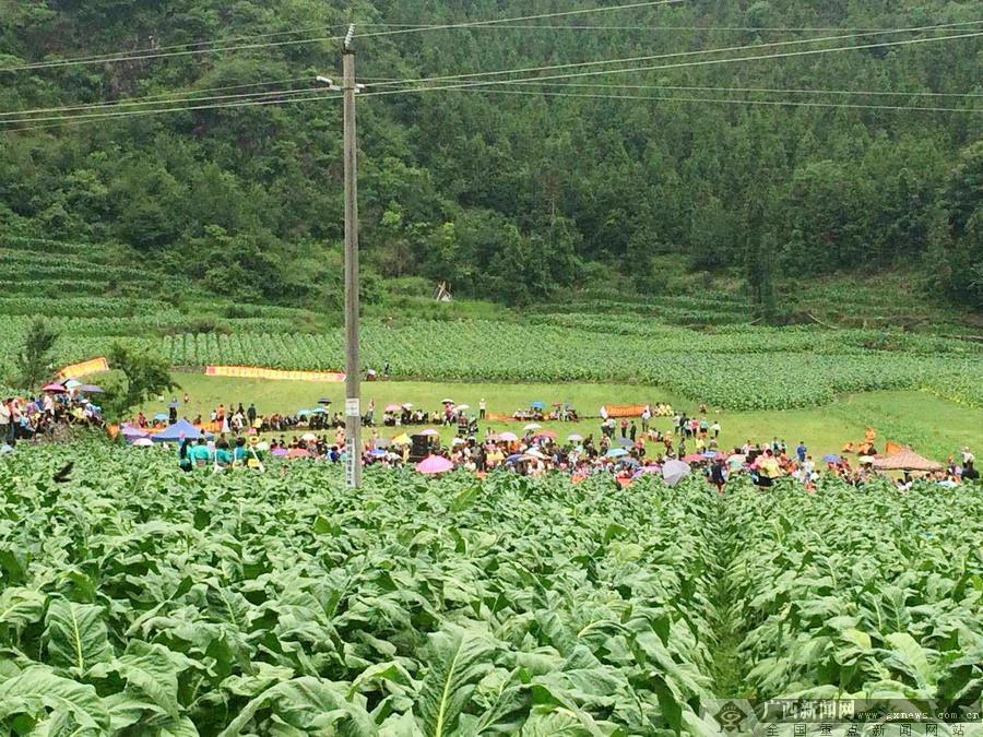 """农行支持""""黄金叶""""产业成为原生态风景线"""