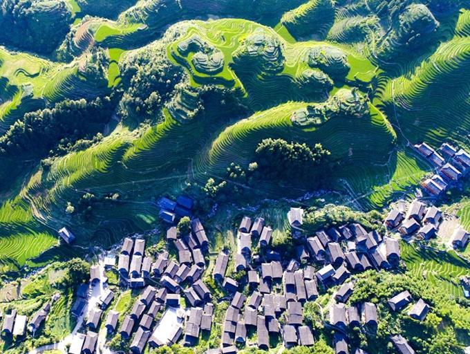 航拍:盛夏美景图 龙脊梯田绿意盎然美不胜收