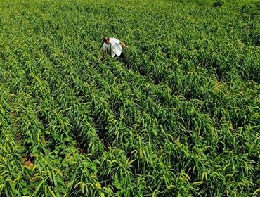 河南汤阴:循环农业 绿色发展