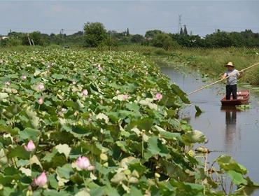 浙江湖州:提升乡村产业