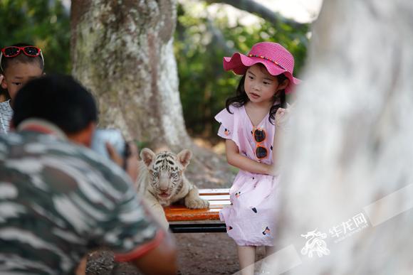 重庆永川有个百兽王国 散养着五大洲430种近3万只珍禽异兽