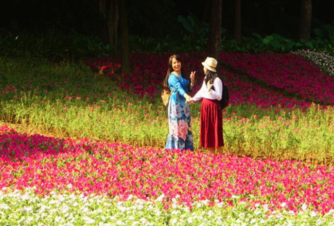 高清:南宁人民公园花海梯田花盛开 吸睛指数十足