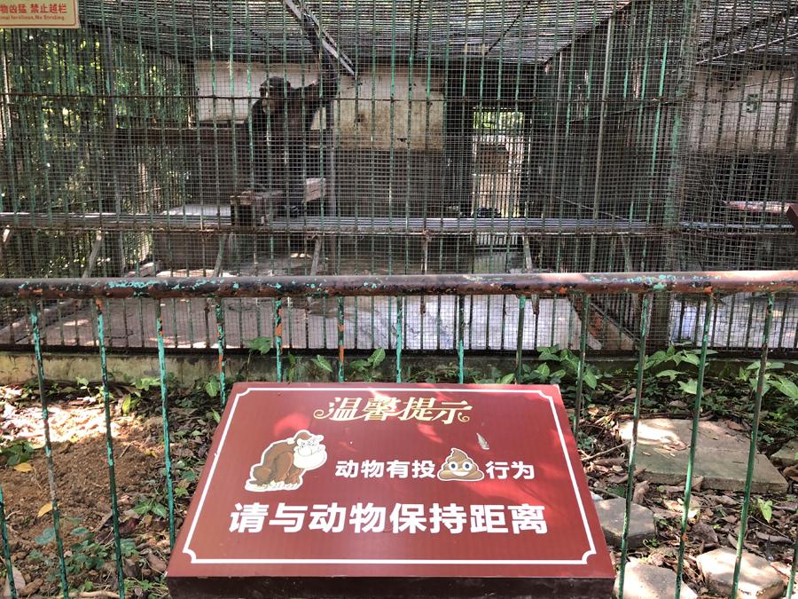 """焦点:游客在南宁动物园遭""""猿粪""""袭击"""