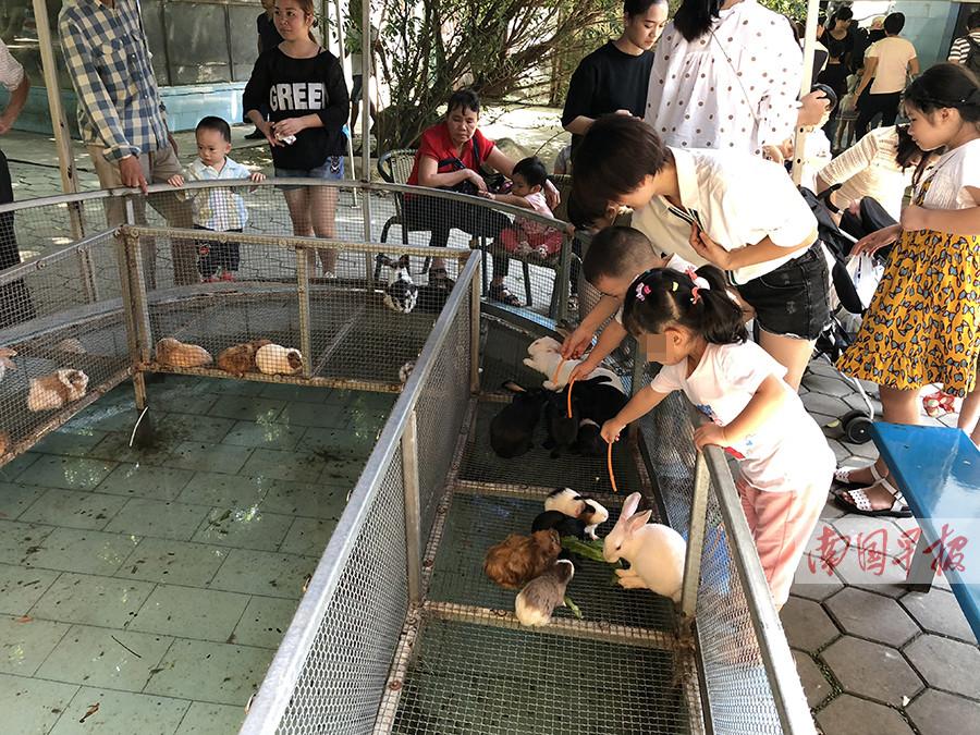 10月3日焦点图:动物园里喂兔子 手被咬伤谁担责