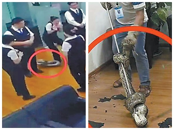 10月13日焦点图:南宁一家银行天花板掉下大蟒蛇