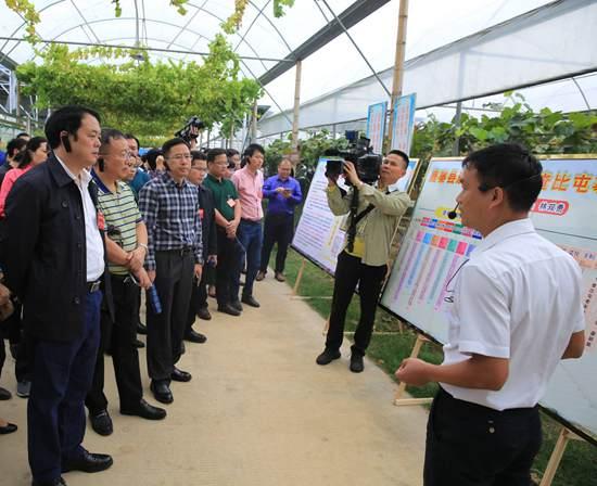 参会人员到鹿寨县呦呦鹿鸣精品葡萄示范区进行实地考察