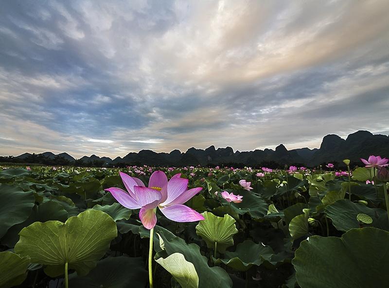 广西壮族自治区文明村镇创建三年行动计划(2018―2020年)