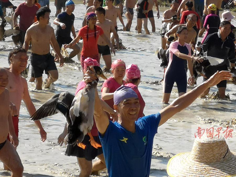 11月4日焦点图:上千名队员泥塘里抓鸭摸鱼