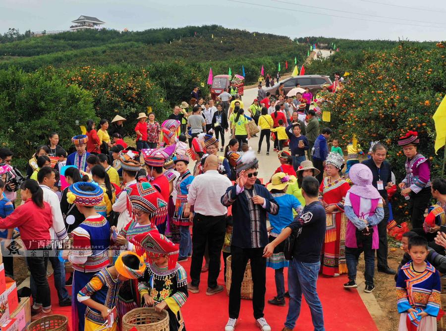 柳城举办生态蜜桔擂台赛 群众欢乐庆丰收(组图)