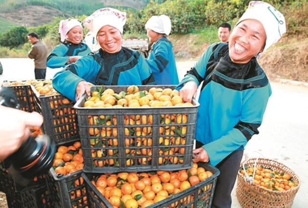 西林��中国沙糖桔之乡欢您迎