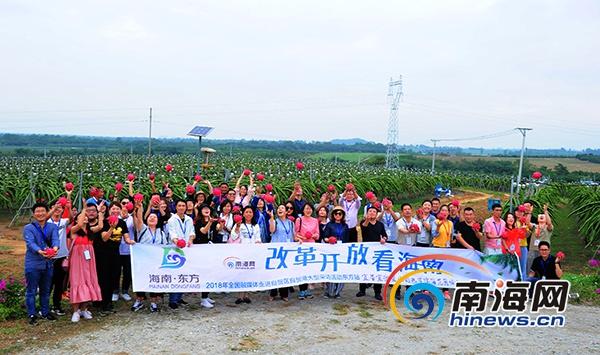 """全国网媒记者探访东方火龙果基地 近距离感受""""红火""""产业"""