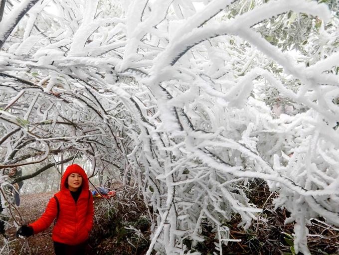 高清:柳州融安出现冰凌雾凇景观 银装素裹引游客
